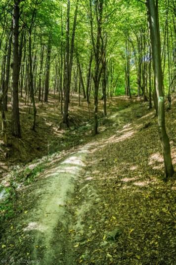 Główny Szlak Świętokrzyski - las w Górach Świętokrzyskich