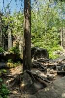 Szczeliniec - droga przez las
