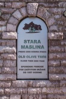 Oliwka z Mitrovica - tablica info