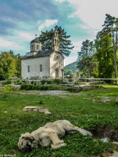 Cetynia - dzień w Górach Lovcen