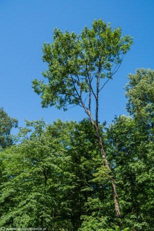 frombork - dolina wałszy drzewa
