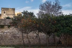 Sycylia - piękna pogoda i kolorowe pomarańcze