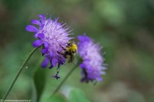 kwiaty owady przyroda