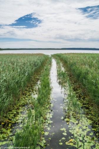 woda jezioro szuwary spływ wigry