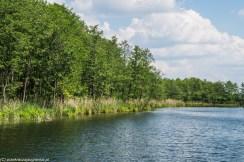 natura jezioro wigry drzewa