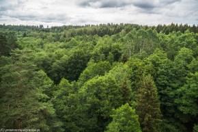 las widziany z góry
