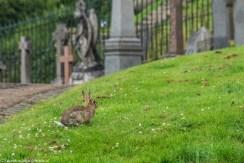 zwierzę królik cmentarz