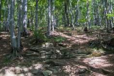 Przełęcz Wyżne w Bieszczadach