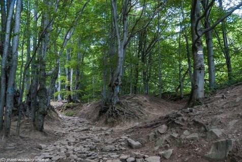 Przełęcz Wyżne - połoniny w Bieszczadach