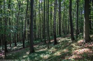 Brama Bieszczad - lasy