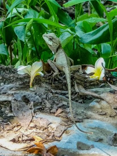 północny wietnam - jaszczurka z kwiatami