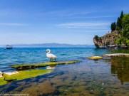 ochryda na weekend - jezioro ochrydzkie unesco łabędź krajobraz