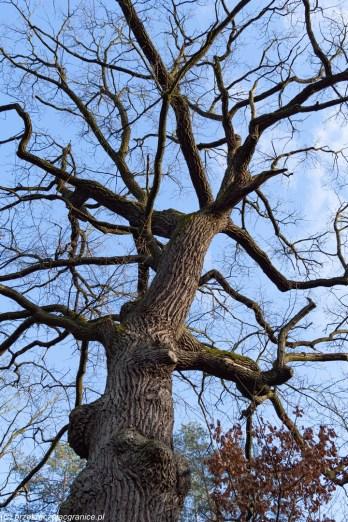 podsumowanie stycznia - Rezerwat Puszcza Słupecka pomnik przyrody