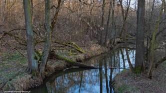 podsumowanie stycznia - puszcza warszawa okolice przyroda