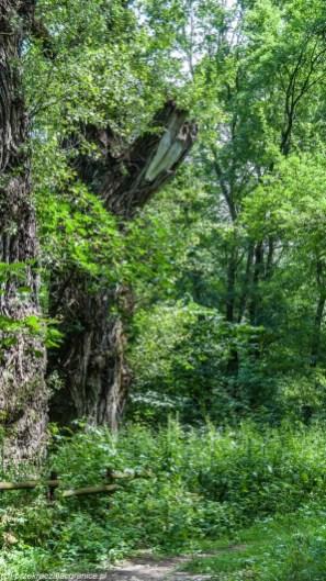 weekend w Toruniu - natura