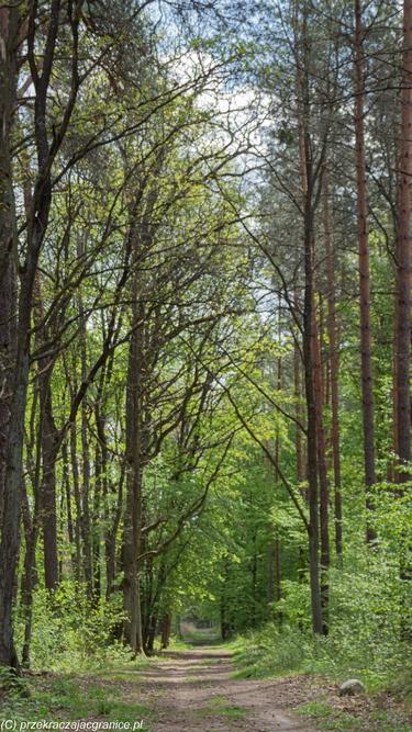 Spacer pod Warszawą - las