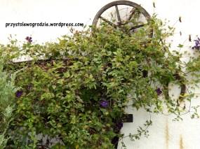 Kompozycja ogrodowo-kwiatowa