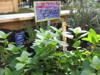 Garden IMG_1402