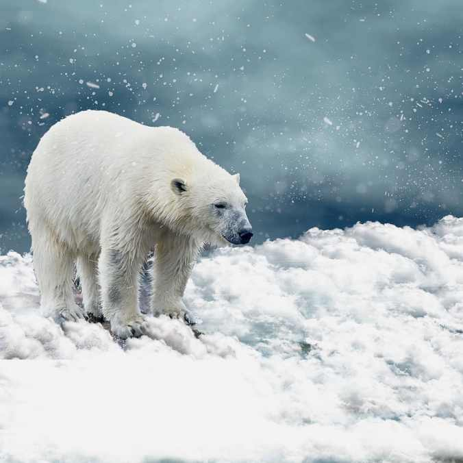 a polar bear standing on ice and snow