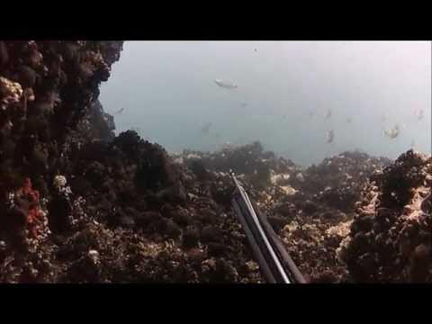 Ψαροντούφεκο Ιούνιος 2015 - Spearfishing June 2015