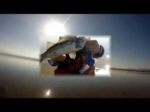 Spinning for seabass and bluefish -Ψάρεμα λαβρακιών και γοφαριών με spinning σε εκβολές ποταμών