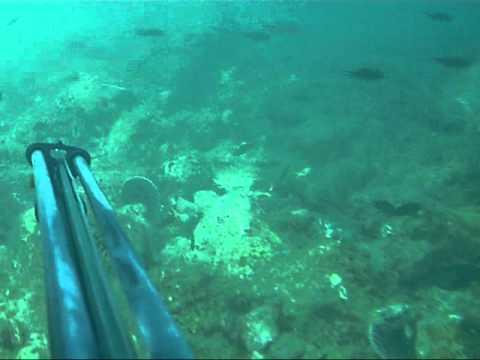 Ψαροντούφεκο στην Ναύπακτο