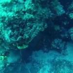 Ψαροτούφεκο: στήρα ροφός – Spearfishing