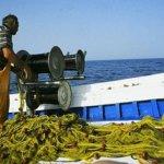 Μέχρι 31 Μαρτίου απαγορεύεται η αλιεία ξιφία στα Χανιά