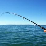 Απαγόρευση αλιείας σε παραλίες του Σαρωνικού