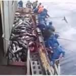 Ταχύτατο, το ψάρεμα τόνου στην Ιαπωνία