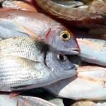 Αυστηροί κανόνες έρχονται το 2017 για το ψάρεμα