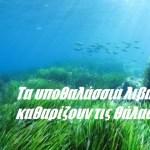 Τα υποθαλάσσια λιβάδια που καθαρίζουν τις θάλασσες