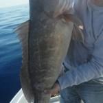 Ψάρεμα  inchiku στη Σύρο με το Νικολάκι
