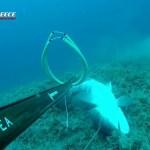 White Grouper Down! The Perfect Shot! Μια τέλεια βολή!
