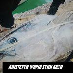 Απίστευτη ψαριά στην Νάξο! Ψάρεψαν 6 σπάνιους κόκκινους τόνους!