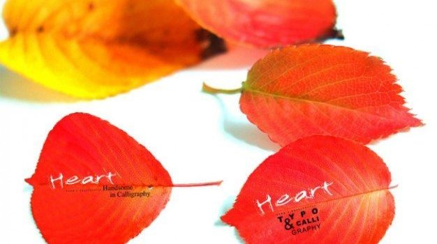 autumn red leaves series psd material