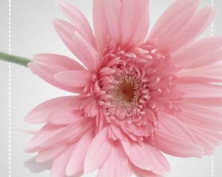 Beautiful pink flower psd