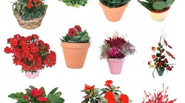 plants bonsai psd material