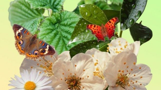 spring pack plant butterfly psd material