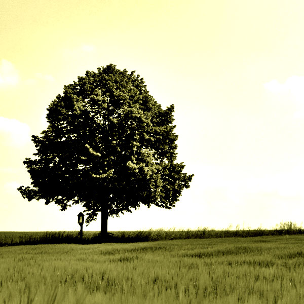 tree17b Create a Magical Image using Photo Manipulation