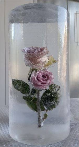 Rose Frozen In Table Display