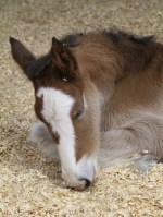 Fiona's mare napping.
