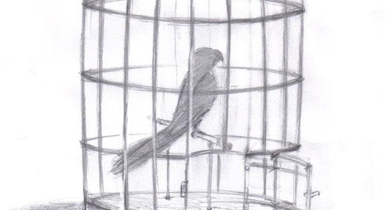 vida, muda, mudança, mudar, passaro na gaiola, gaiola aberta, Um Pássaro em Sua Gaiola