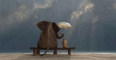 generosidade, gentileza, altruísmo, felicidade