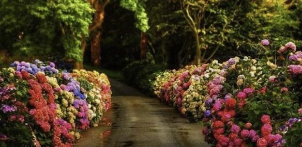 felicidade, caminho, caminho florido, caminho com flores, flores