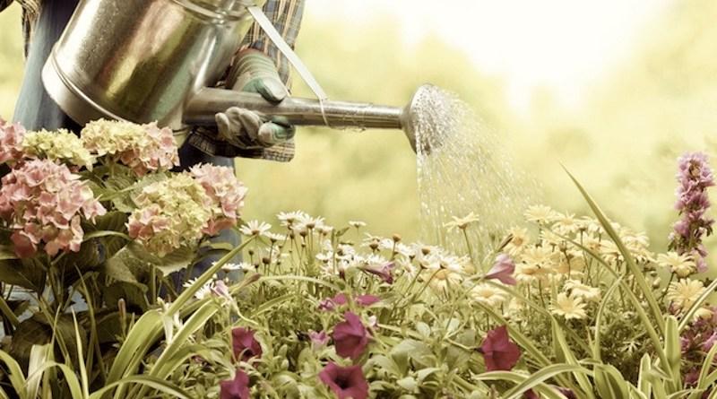 como eu sei se amo meu namorado, regando jardim