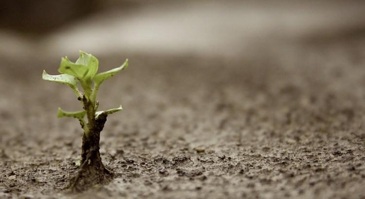 feliz ano novo, germinar, planta no asfalto