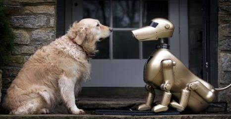 cachorro-robo