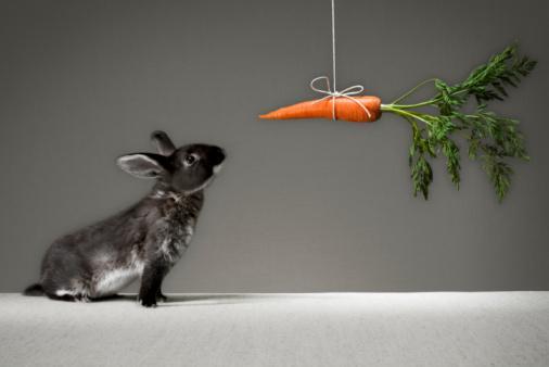 Motivação para um coelho
