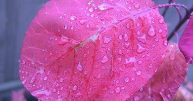 ombrofobia medo de chuva